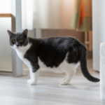 COVID cat concerns: separation anxiety & obesity
