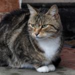 Home alone? What to do with your cat when you go on holiday