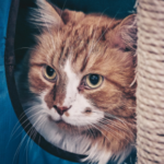 How to find the right cat sitter in Derbyshire