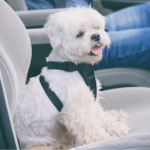 Causes of car travel sickness in dogs and remedies