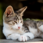 3 important summer disease checks for cats in Derbyshire