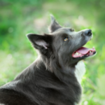 Beware of five common summer dog diseases