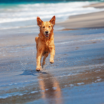 Read STAR Vets' tips and help your dog get over a stressful summer