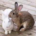 Lara advises if rabbits, guinea pigs & hamsters need companions